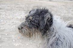 Hund abgedeckt mit Sand Stockfoto