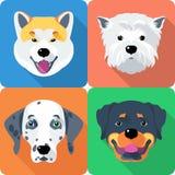 Hund Akita Inu, Dalmatiner, Rottweiler und West lizenzfreie abbildung