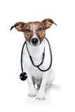 Hund als Doktor stockfoto