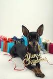 Hund als Geschenk auf neuem Jahr und Weihnachten Stockfotografie