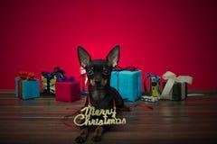 Hund als Geschenk auf neuem Jahr und Weihnachten Lizenzfreie Stockbilder