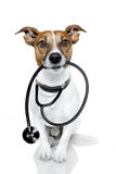 Hund als Krankenschwester Stockbild