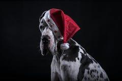 Hund als Weihnachtsmann für neues Jahr Lizenzfreies Stockbild