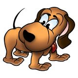 Hund Andy Stockbild