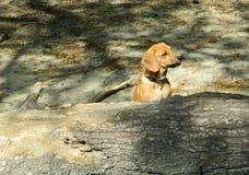 Hund Astra 5 Stockfotos