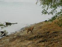 Hund Astra 7 lizenzfreie stockbilder