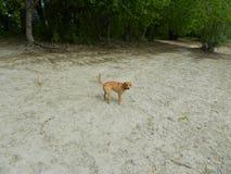 Hund Astra 6 Stockfotos