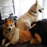 Hund auf Hund Stockfoto