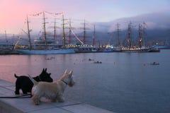 Hund auf Abendpromenade Lizenzfreie Stockbilder