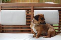 Hund auf Bank Lizenzfreies Stockbild