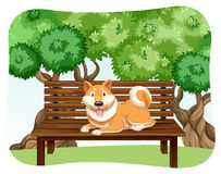 Hund auf Bank Stockfotografie