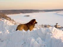 Hund auf Bank von Winterfluß Lizenzfreie Stockfotos
