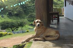 Hund auf Bauernhof stockbilder