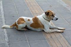 Hund auf dem Bürgersteig Lizenzfreie Stockfotos