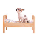 Hund auf dem Bett lizenzfreies stockfoto