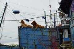 Hund auf dem Boot Stockfoto