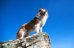 Hund auf dem Felsen lizenzfreie stockfotos