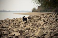 Hund auf dem felsigen Seeufer Lizenzfreies Stockfoto