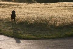 Hund auf dem Gebiet Stockfotografie