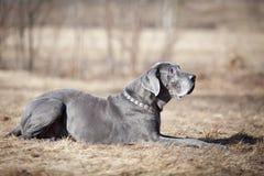 Hund auf dem Gebiet Stockbilder