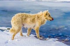 Hund auf dem gefrorenen Fluss Lizenzfreie Stockfotos