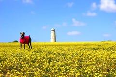 Hund auf dem gelben Gebiet Lizenzfreie Stockfotografie
