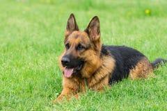 Hund auf dem Gras lizenzfreies stockfoto
