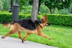Hund auf dem Gras stockbilder