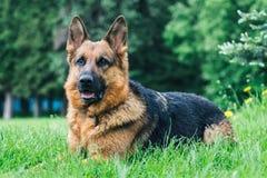 Hund auf dem Gras lizenzfreies stockbild