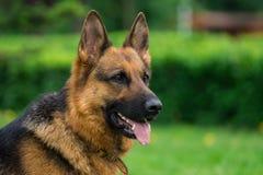 Hund auf dem Gras lizenzfreie stockfotos