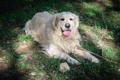 Hund auf dem Gras Lizenzfreie Stockbilder