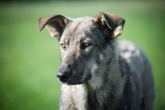 Hund auf dem Gras Stockfoto
