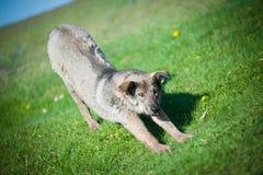 Hund auf dem Gras Stockfotos