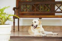 Hund auf dem Portal Lizenzfreie Stockfotos