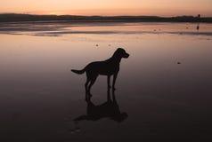Hund auf dem Sand Stockfoto