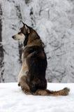 Hund auf dem Schnee Stockbild