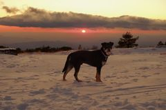 Hund auf dem Schnee bei dem Sonnenuntergang in Etna Park stockbild