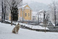 Hund auf dem Stadtplatz Lizenzfreie Stockfotos