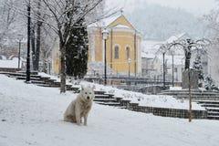 Hund auf dem Stadtplatz Stockfotografie