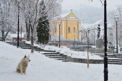 Hund auf dem Stadtplatz Stockbild