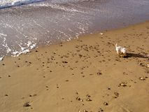 Hund auf dem Strand Stockbild