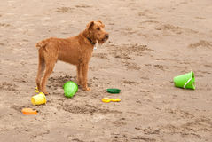 Hund auf dem Strand Stockbilder