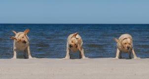 Hund auf dem Strand Fotos de archivo