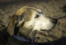 Hund auf dem Strand Stockfotos