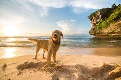 Hund auf dem Strand Lizenzfreie Stockfotografie