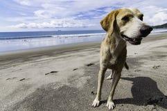 Hund auf dem Strand Stockfoto