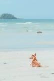 Hund auf dem Strand Lizenzfreie Stockfotos
