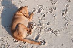 Hund auf dem Strand Lizenzfreie Stockbilder