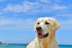 Hund auf dem Strand - goldener Apportierhund stockfotografie