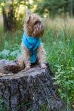 Hund auf dem Stumpf im Park Lizenzfreie Stockfotos